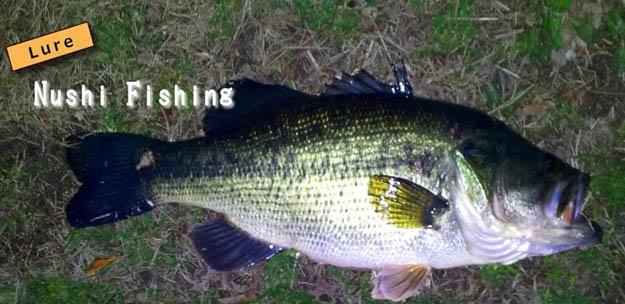 Lure Nushi Fishing
